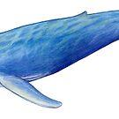 Blue Whale by Tamara Clark