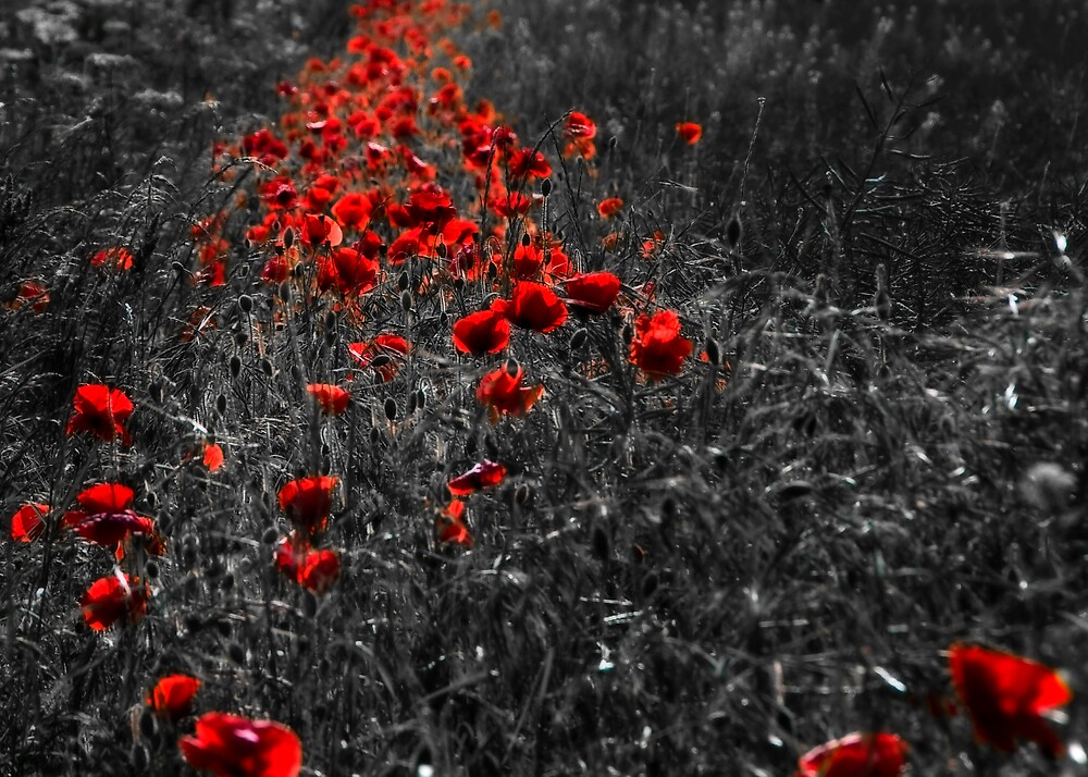 Poppies Pathway  by Svetlana Sewell