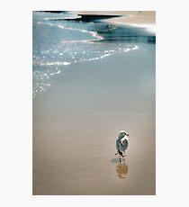 Shoreline Solitude Photographic Print