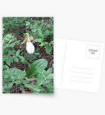 Lady Slipper Postcards