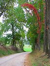 Country Road by Ginny York