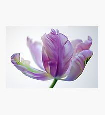 Raw Silk Photographic Print