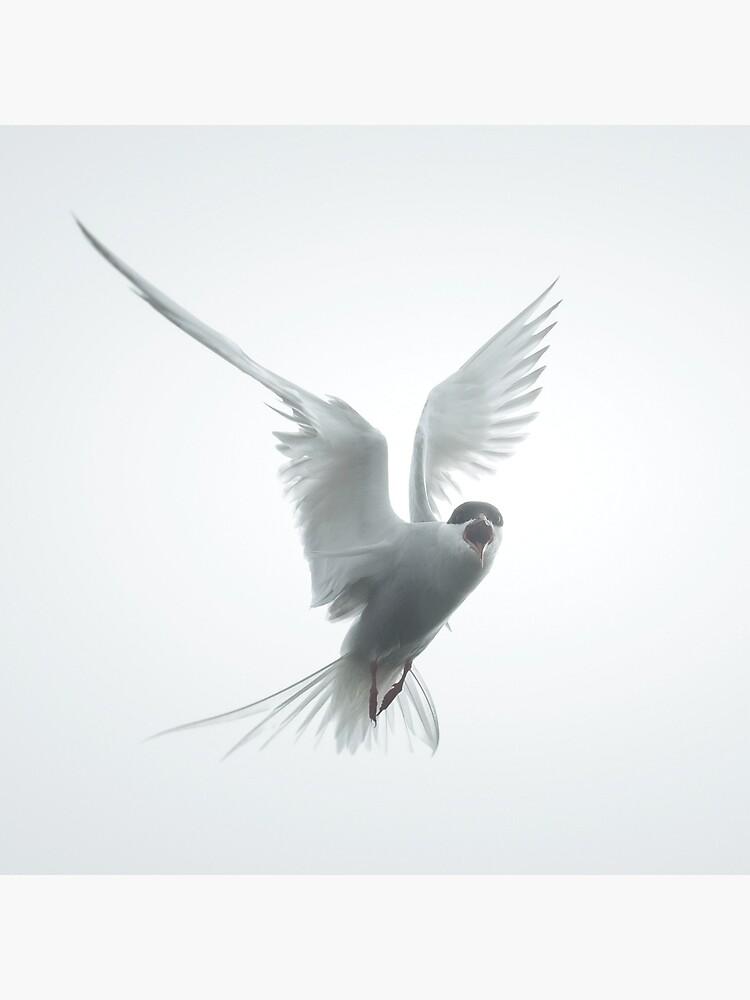 «Sterne Arctique» par patricemestari