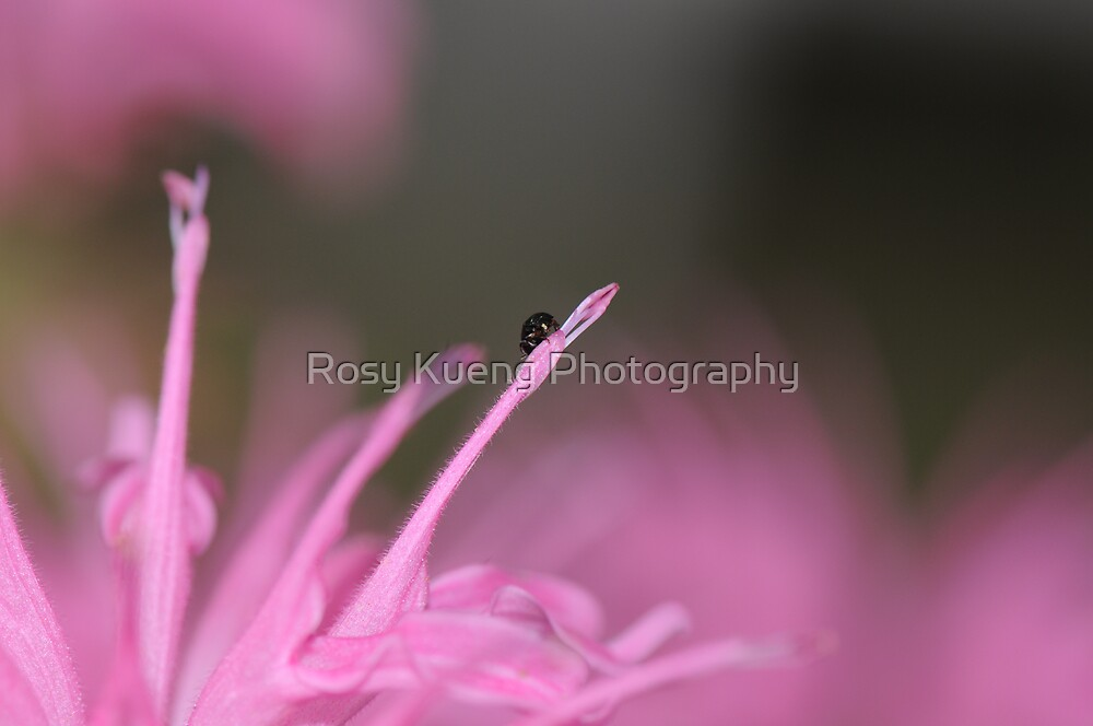 Pink Paradise by Rosy Kueng Photography
