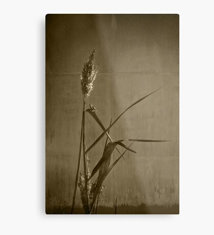 Long Grass  Metal Print