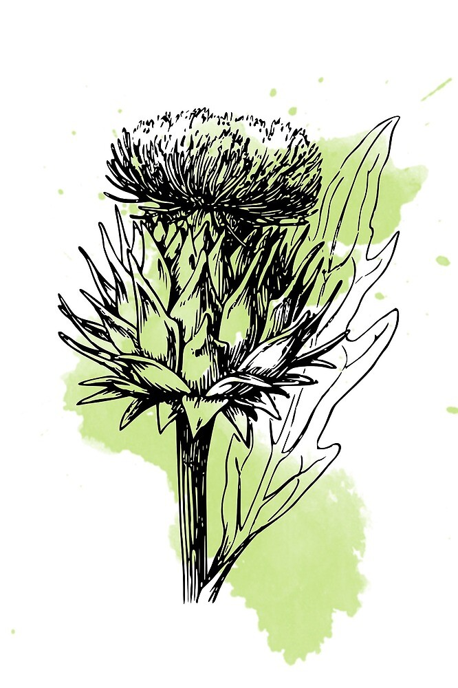 Green Artichoke by Victoria  Randall