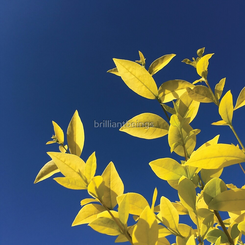 bright yellow privet leaves against blue sky by brilliantbeings