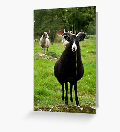 sheepish Greeting Card