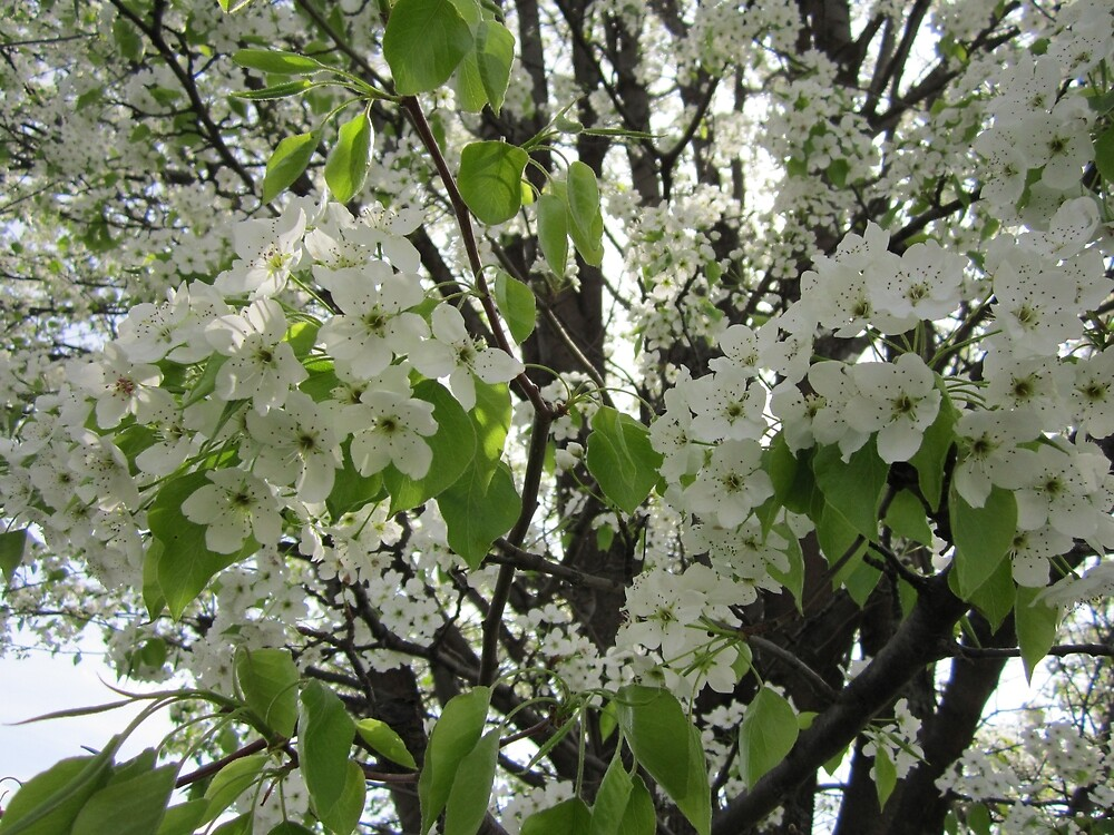 White Blossom by Kathryn Coleman Studio