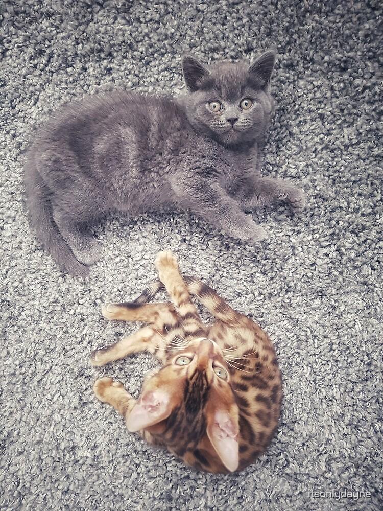 Cute kittens by itsonlydayne