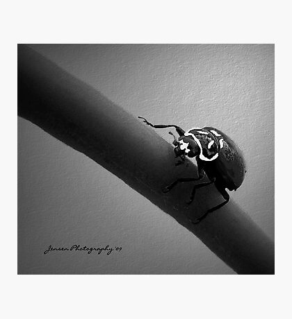 In The Spot Light 2   ( Ladybug Series ) Photographic Print