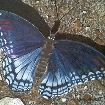Blue Butterfly - Savannah Charaxes by putmanart