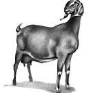 Nubian Milking Doe by Patricia Howitt