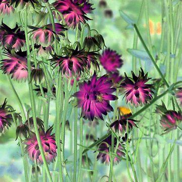 wild flowers by mindgoop