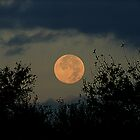 Hunter's moon in September of 2007 by jammingene