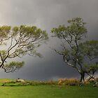 Walltown trees. Hadrian's Wall by Billlee