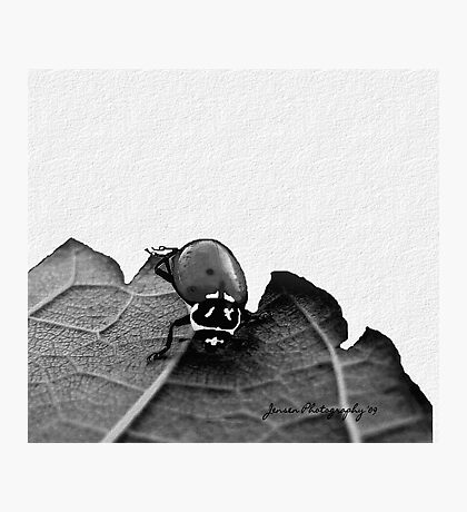 Put Your Left Legs Out......And Shake Them All About...2    ( Ladybug Series ) Photographic Print