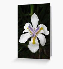 African White Iris Greeting Card