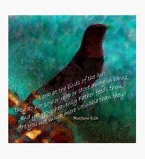 Matthew 6:26 Photographic Print
