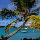 Palm In Paradise by DARRIN ALDRIDGE