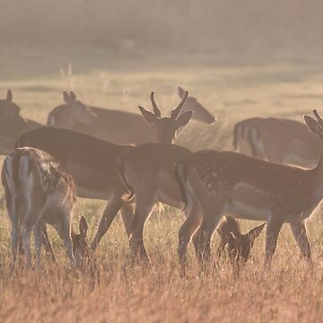 Fallow Deer by Lightrace
