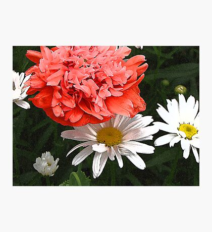 Daisies and Poppies Photographic Print