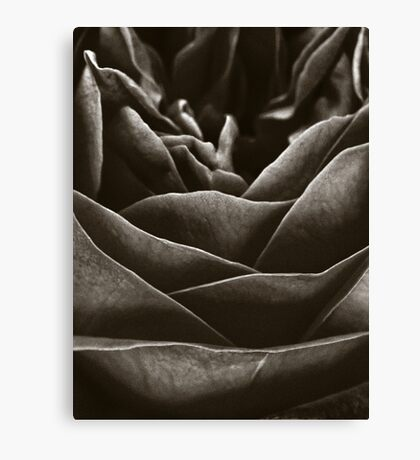 Dark Rose Canvas Print