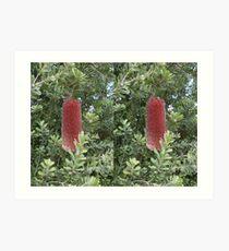 Banksia Praemorsa - 3D Stereo Pair Art Print