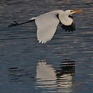 Flying Egret by hurky