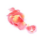Rosa Blütenblätter von VanGalt