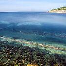 Clear Waters - Lyme Regis by Susie Peek
