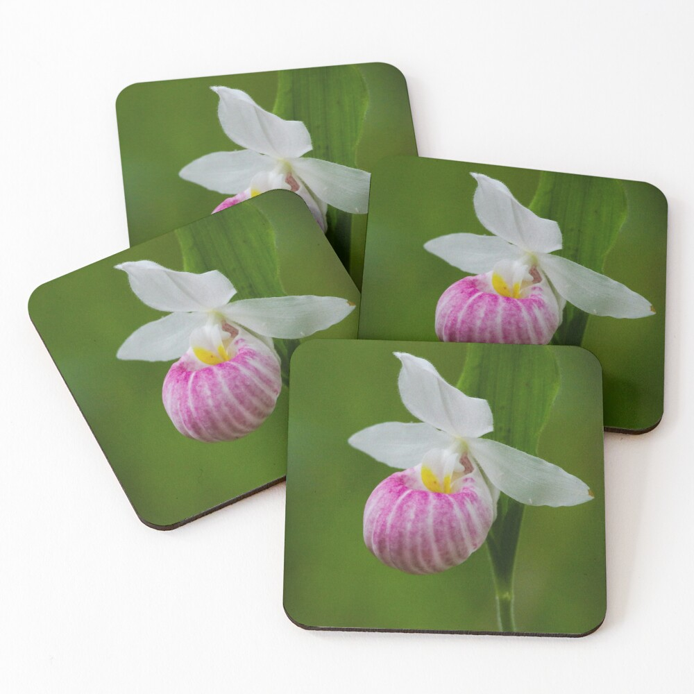 Showy Pink Ladyslipper Orchid Coasters (Set of 4)