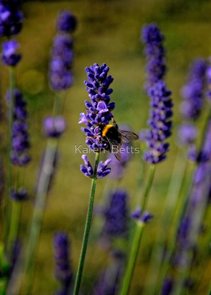 Bee on Lavender by Karen  Betts