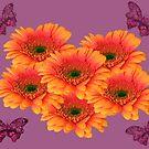 Gerberas And Butterflies by hurmerinta