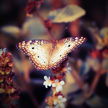 Butterfly by leandrojsj