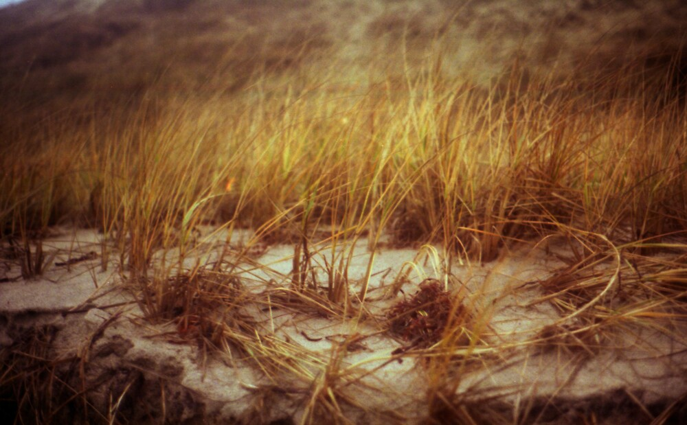 Beach Grass by dylangould
