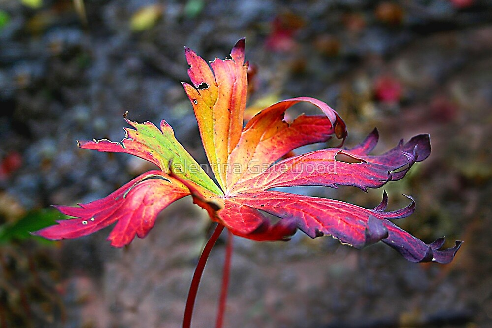 A Single Leaf by Valentina Gatewood
