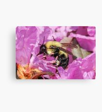 Bee Collecting Pollen Canvas Print