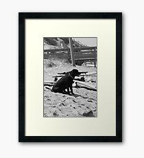 BoardDog Framed Print