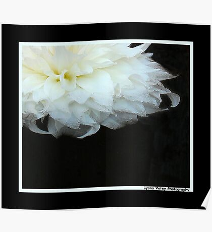 Floating Dahlia Poster