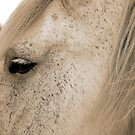 Eye of the Percheron by Brian Gaynor