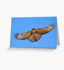 0627093 Red Tailed Hawk (Juvenile) Greeting Card