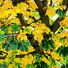 autumn chestnut by tomdonald