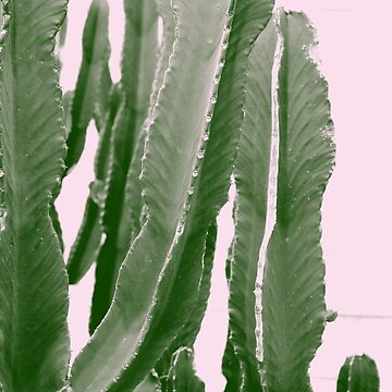 Cactus in the Pink Sky by MUZA9