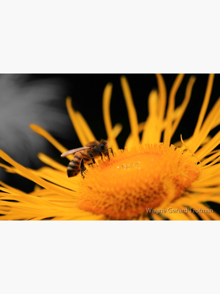 Flower Raider by redmoondragon