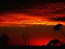 """""""Pre-dawn Sky"""" by debsphotos"""