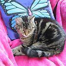 Gemütliche Kitty von BlueMoonRose