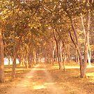 A Golden Walk... by HansBellani