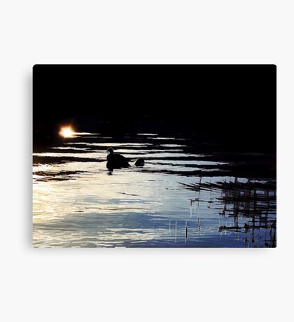 To the Light  Canvas Print