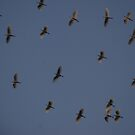 Four n Twenty night Birds by Graham Mewburn